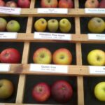 A selection of apples